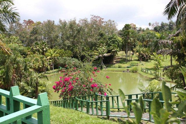 Jard n bot nico nacional upr pa 39 donde voy pr for Actividades en el jardin botanico de caguas