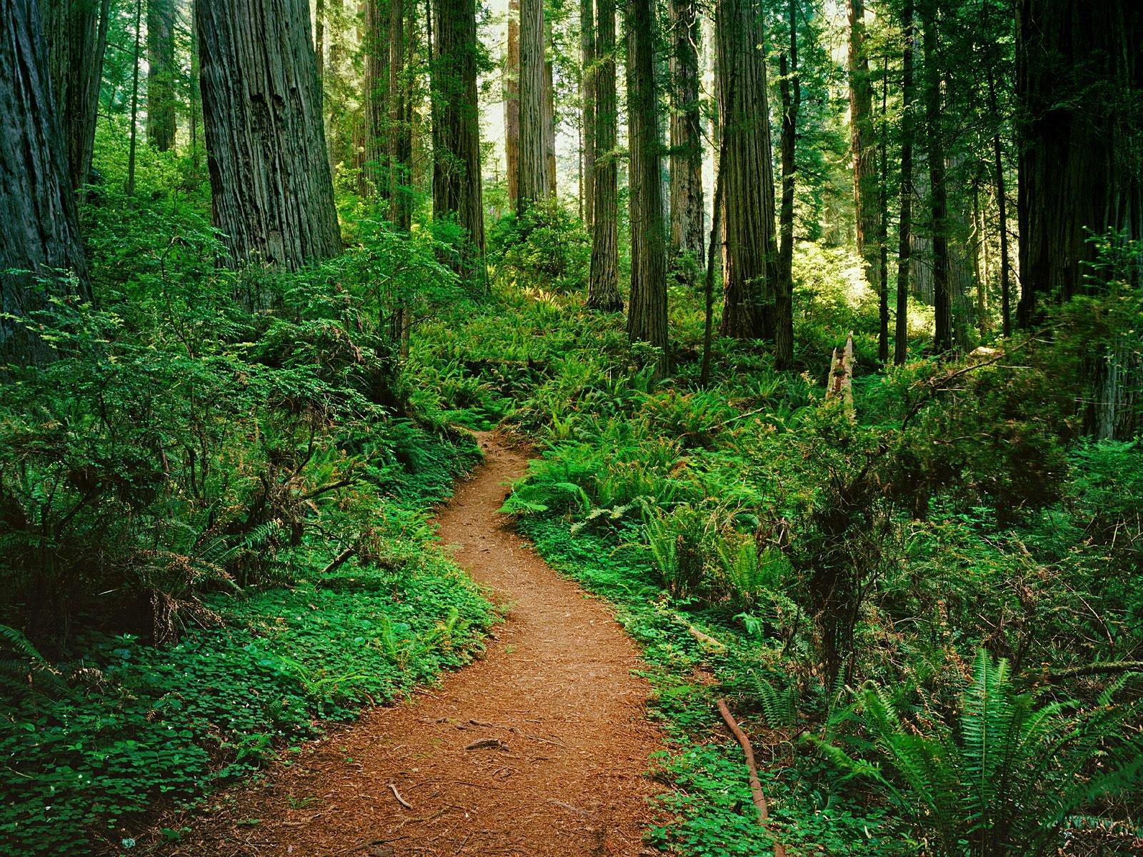 Anal en el bosque